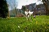 13-03-2012 :   Series. This could be spring #2  -   C'est peut-tre le printemps #2